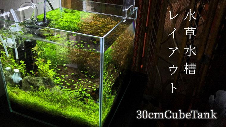 レイアウト 30cm 水槽